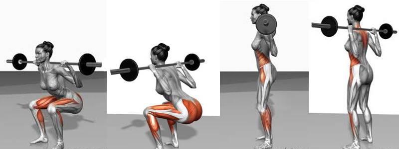 squat_muscles
