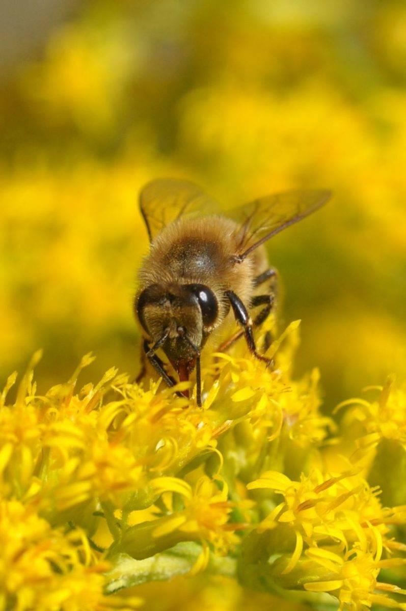 Miele, storia e benefici per il nostro corpo-1
