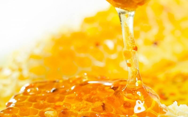 Miele, storia e benefici per il nostro corpo-5